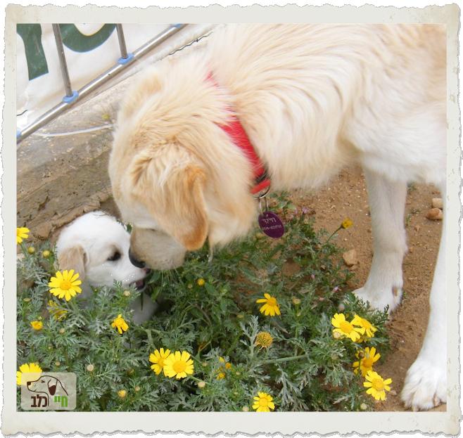 כלב מרחרח גור קטן בגינה