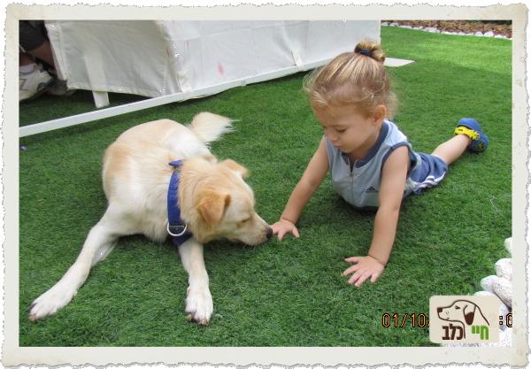 גידול ילדים וכלבים