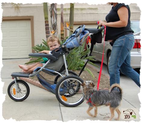 תינוק בעגלה וכלב