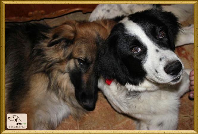 שולה וסוזי מדגמנות שתי כלבות בבית