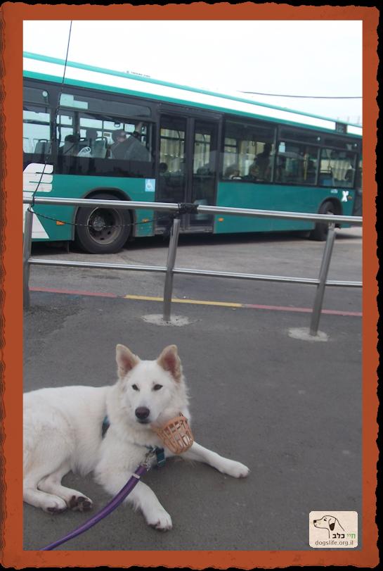 צ'אי ממתינה לאוטובוס בתחנה
