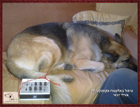 רפואה משלימה בכלבים