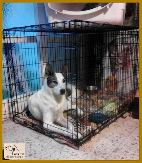 כלב בתוך כלוב רשת