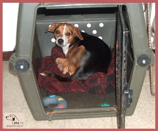 כלב נח בכלוב פלסטיק