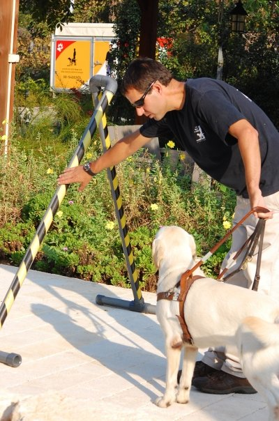 guide-dog-3