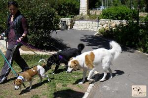 dogwalker-1