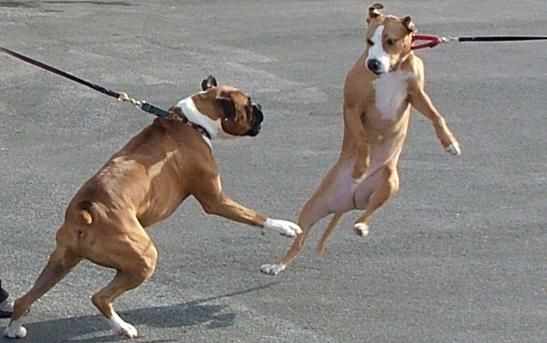 leash-1